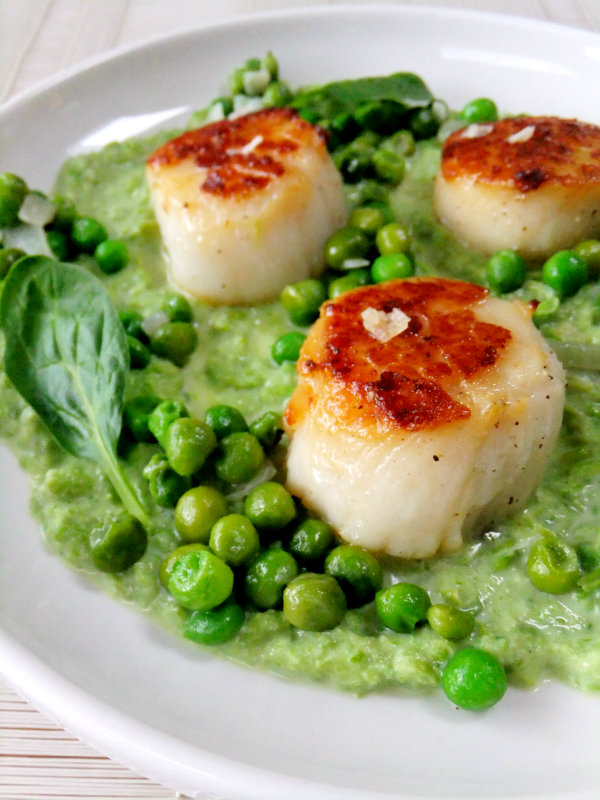 seared scallops in pea puree