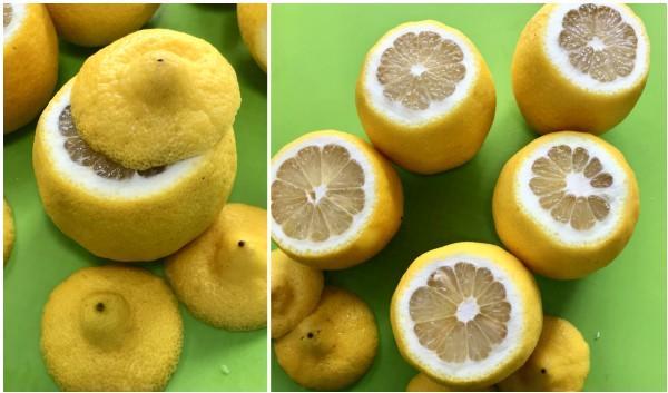 lemon shells